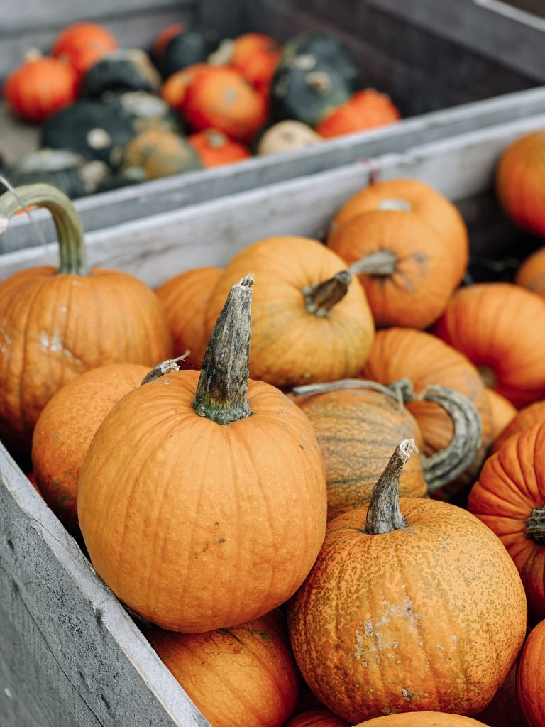 pumpkins and gourds for sale at local fruit farm