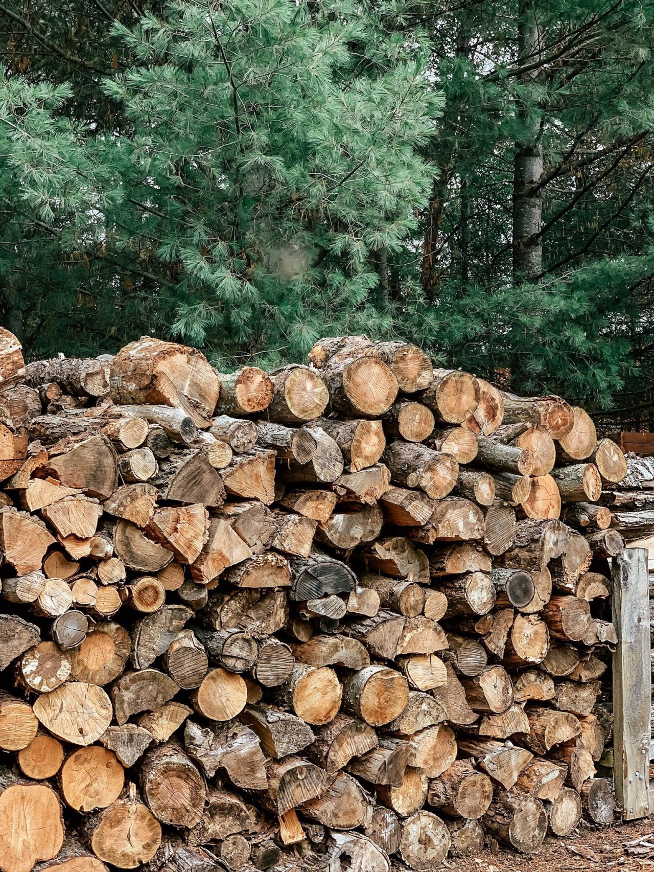 large pile of chopped wood with pines in background
